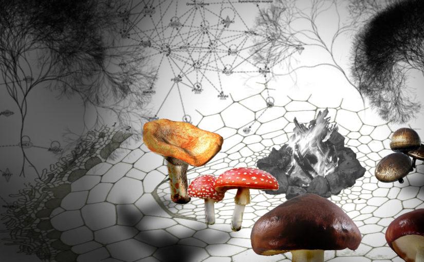 Fungi Internet – Mycorrhizal Communication Infrastructure